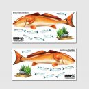 Redfish Wall Decal Removable Sticker Sets