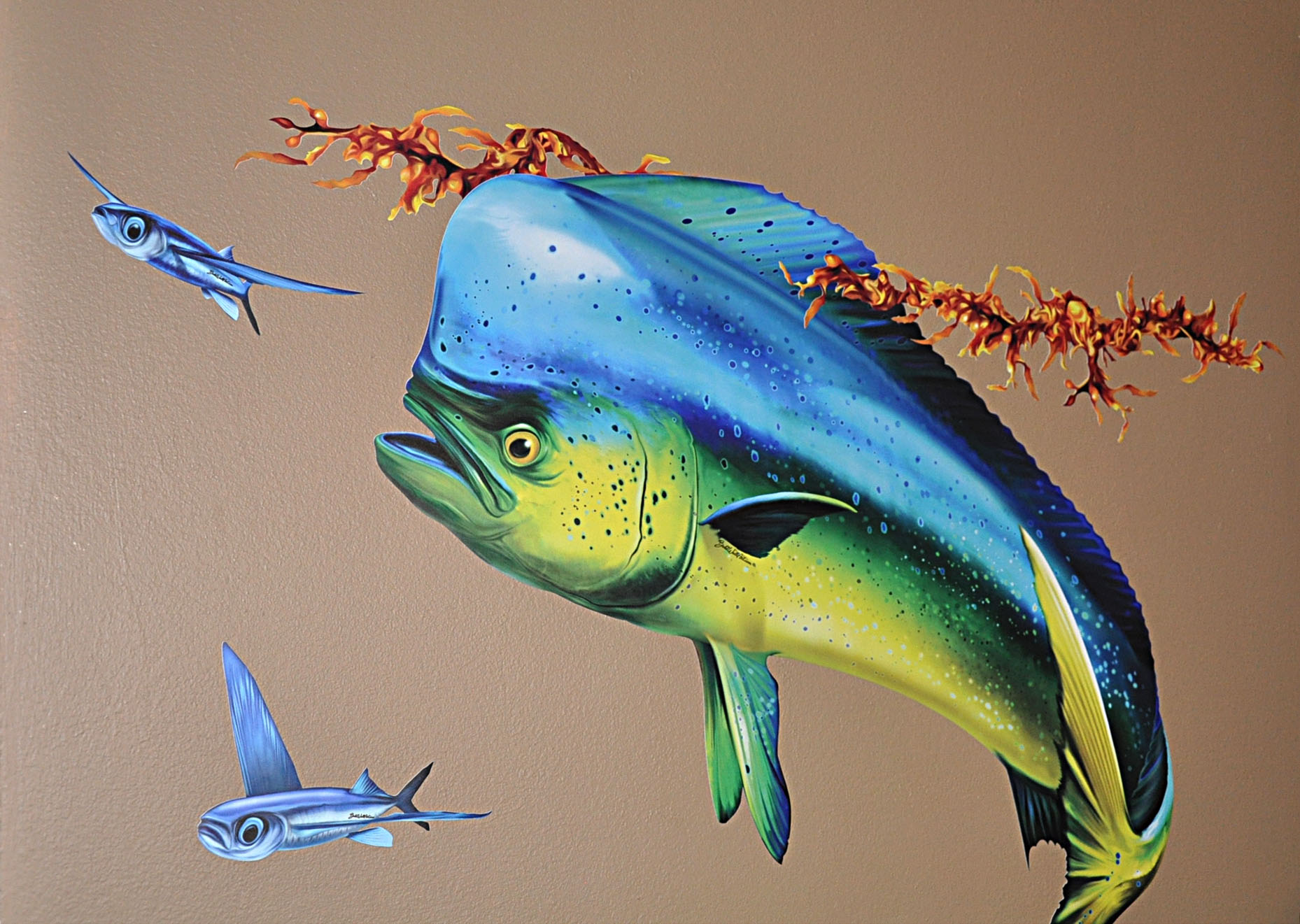 Dolphinfish drawing - photo#12