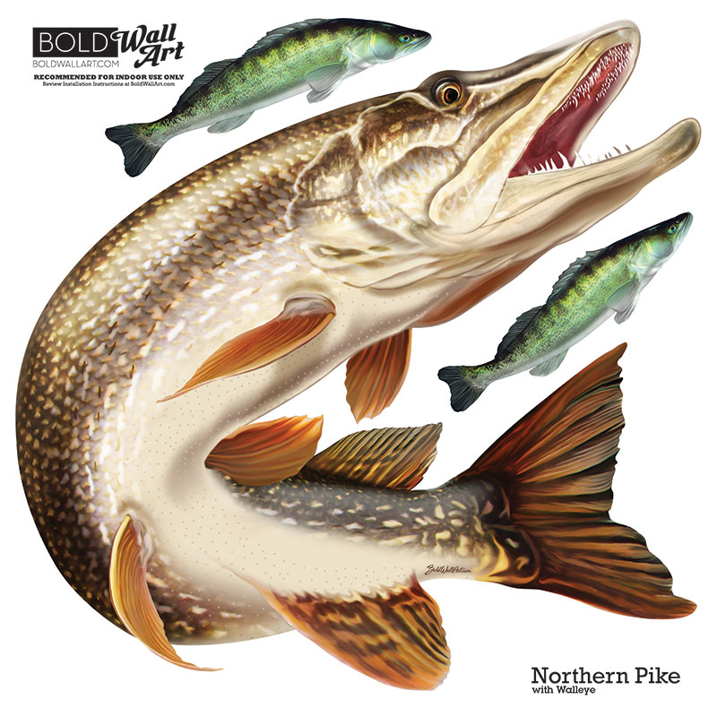 Bold wall art northern pike wall decal for Fishing for pike